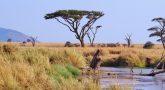 למה לבחור בטיולים לאפריקה?